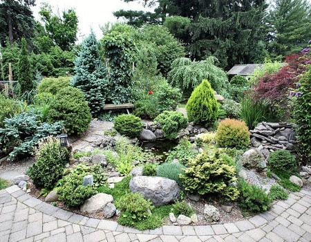 Хвойный садик на фоне камней
