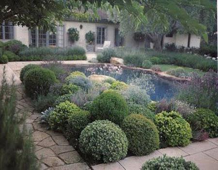 Хвойный садик из шаровидных