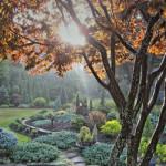Хвойный садик с карликовыми формами