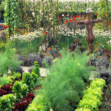 Красивые грядки дополненные цветами