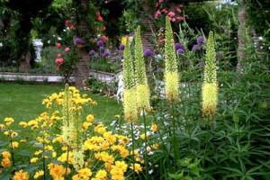 красивые сочетания цветов для клумбы