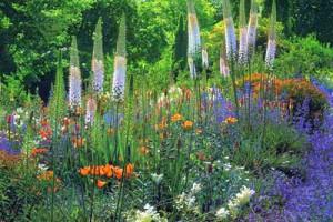 сочетания цветов на клумбе
