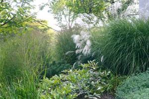 клумба из декоративных трав
