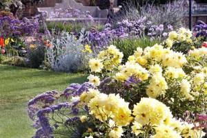 красивые клумбы в саду