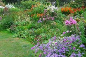 роскошные клумбы на садовом участке