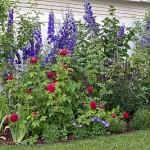 клумбы с розами в саду