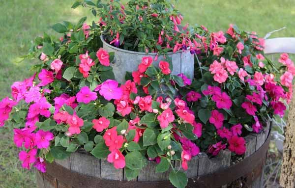 клумбы и цветники из подручных материалов в саду