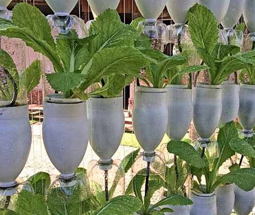 идеи для дачи вертикальный сад из пластиковых бутылок