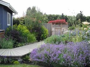 варианты цветников из многолетников в саду