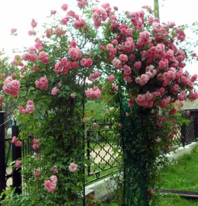 опоры под плетистые розы