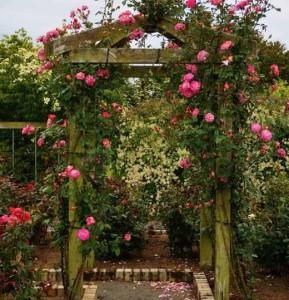 опоры для вьющихся роз