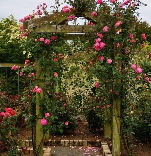 Опора для вьющихся роз