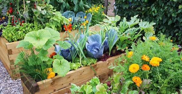 особенности выращивания растений в высокой грядке