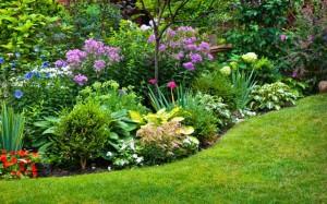формы растений в ландшафтном дизайне