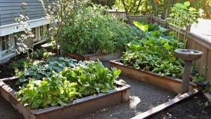 идеи дизайна огорода