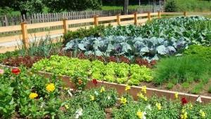 красивый огород с высокими грядками
