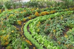 красивый огород фото