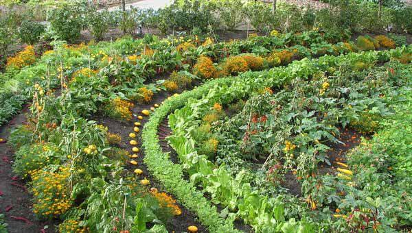 Красота на огороде