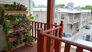 красивый огород на балконе