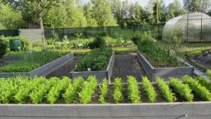 простой красивый огород