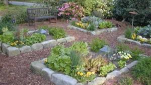красивый дизайн огорода