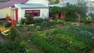 огород фото