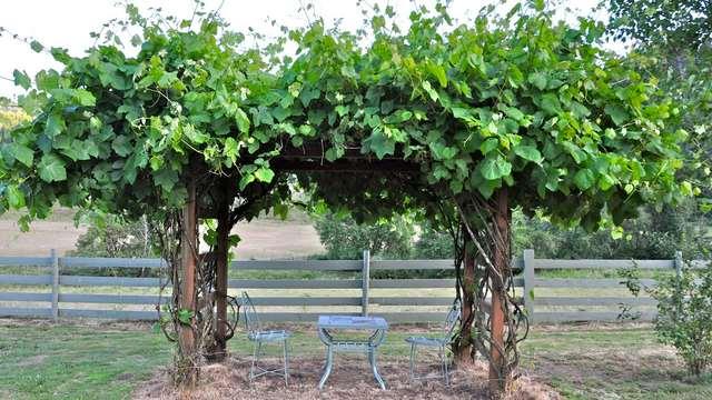 Шпалера для винограда своими руками