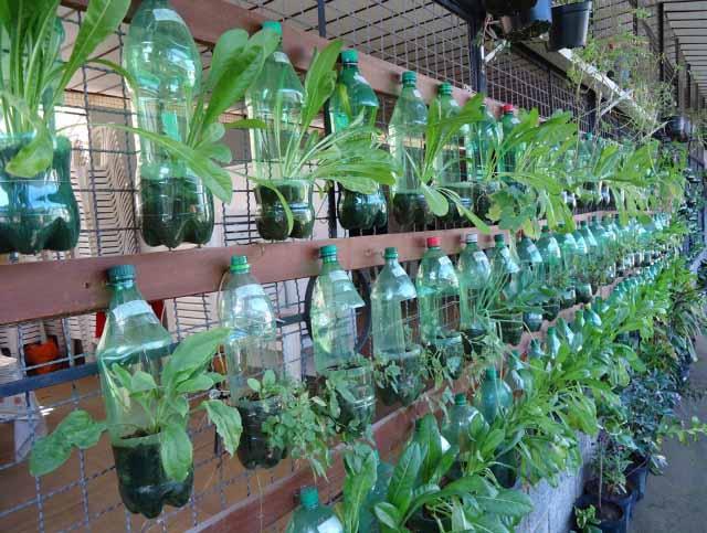вертикальное озеленение фото