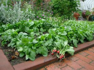 сад огород своими руками на даче