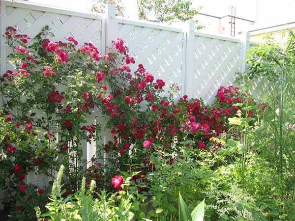 сад и огород своими руками