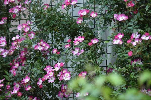 красивый двор частного дома фото