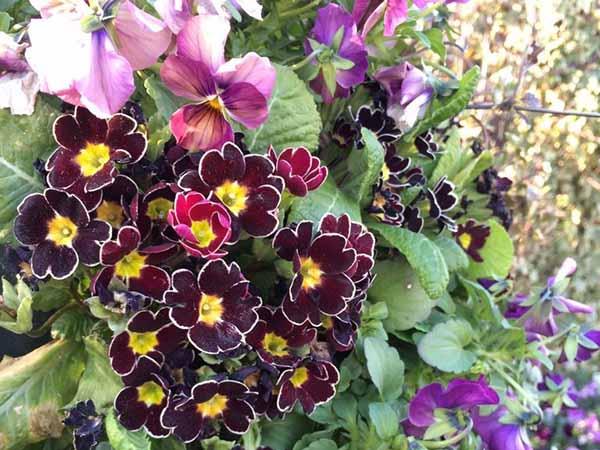 красивый двор частного дома цветы фото