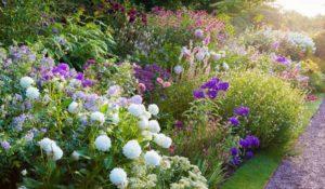 неприхотливые многолетники для клумбы цветущей все лето