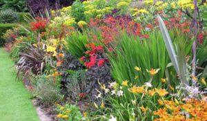 как подобрать цветы для клумбы цветущей все лето