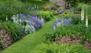 фото с названиями цветов для клумбы цветущей все лето